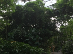 eden-rope-bridge-canopy7