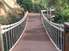 eden-rope-bridge-canopy