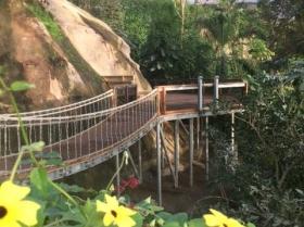 eden-rope-bridge-canopy4