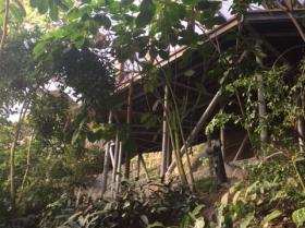 eden-rope-bridge-canopy5