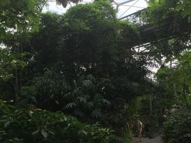eden-rope-bridge-canopy7